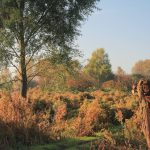 Herfst rietland Zanddijk