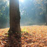 Herfst in het Smaal