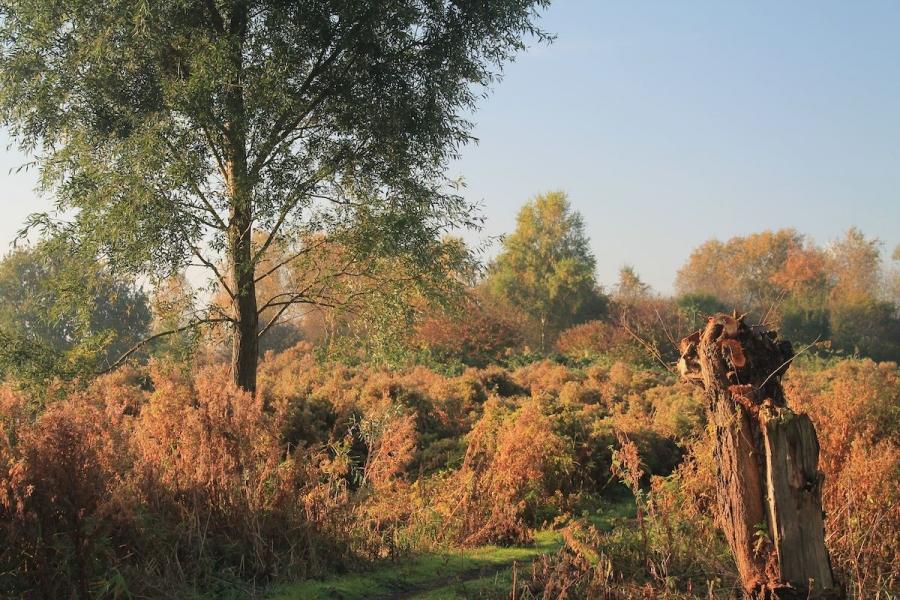 herfst-zanddijk-rietland